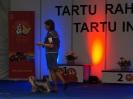 Тарту-Эстония ноябрь 2013г.,-CAC,CACIB, BOS