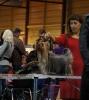 BALTIC WINNER 2013 - International Dog Show 10.11.2013-Чемпион Латвии,Чемпион Балтии.