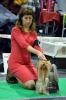 BALTIC WINNER 2013 - International Dog Show 10.11.2013